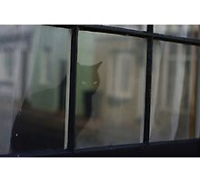 Black Cat in the Window Photographic Print