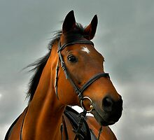 Our thoroughbred horse on his 20th birthday by Dan Shalloe