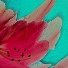 pink by kathywaldron