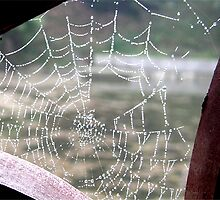 dew on spider's web by gothgirl