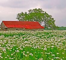 Red Barn and White Flowers by Joe Hewitt