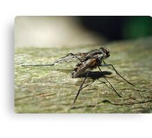 March Fly Canvas Print