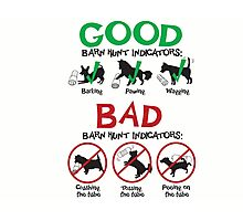 Good and Bad Barn Hunt Indicators Photographic Print