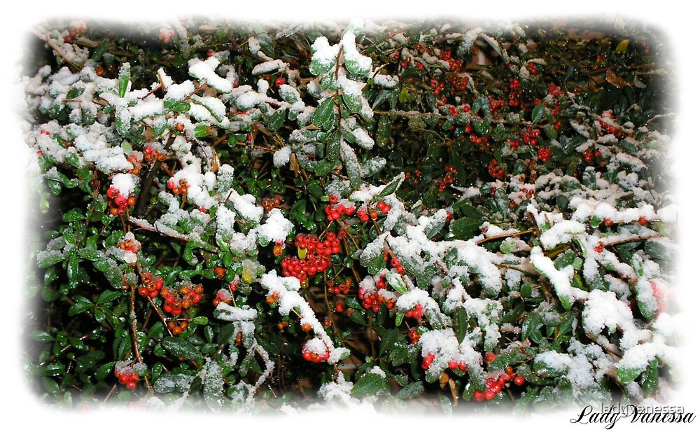 Frost Berries by ladyvanessa