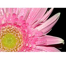 Another Day, Another Gerbera Photographic Print