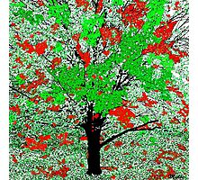 Celebration Tree Red and Green Photographic Print