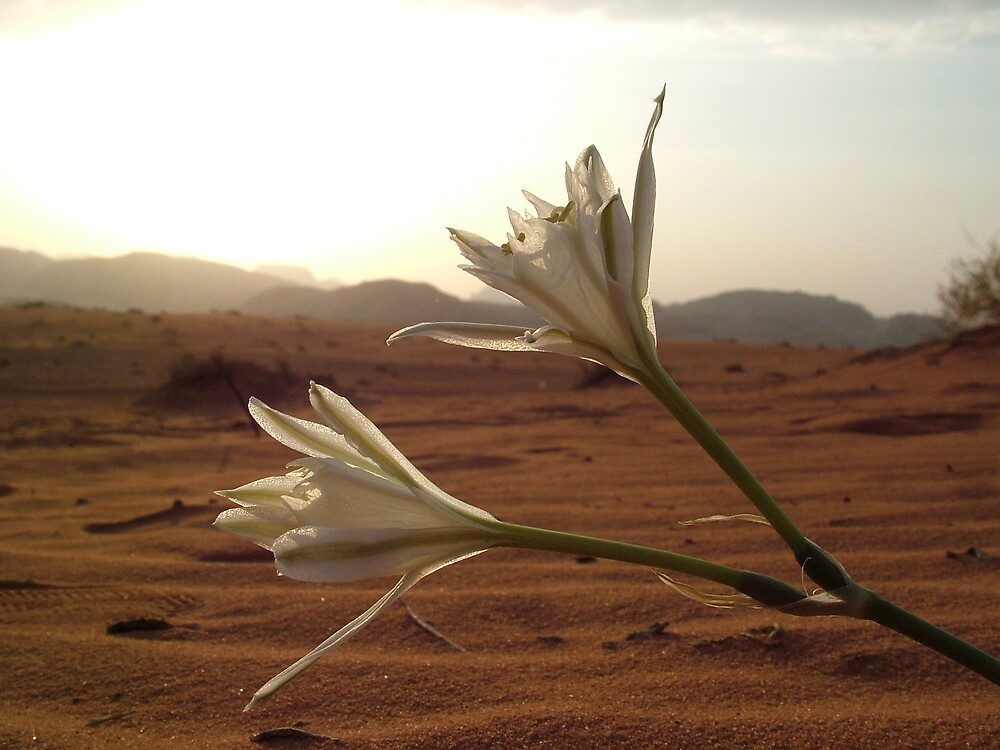Desert Flowers by Matthew Owen