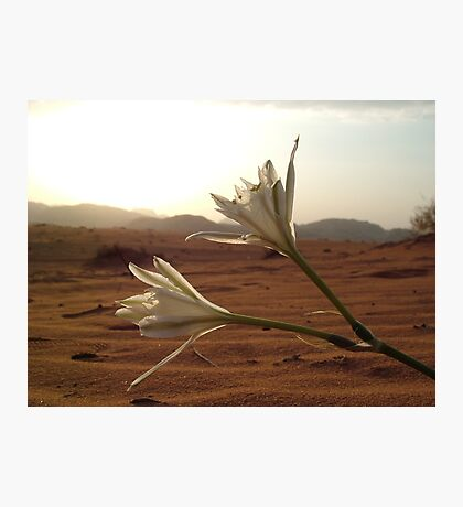 Desert Flowers Photographic Print