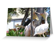 Pelicans x two  Greeting Card