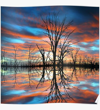 Tree Lake Sunset Poster