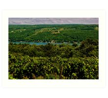 Keuka Lake Grape Vineyard Art Print