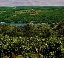 Keuka Lake Grape Vineyard by Cheri Perry