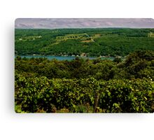 Keuka Lake Grape Vineyard Canvas Print