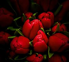Red Tulip by jerry  alcantara