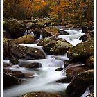 Autumn, Greenbrier GSMNP by ThomasRBiggs