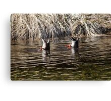 Synchronised Duck Diving Canvas Print