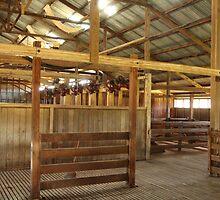 Oakhampton Wool Shed.  Near Tamworth, NSW by Mandy Gwan