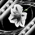 Wall Art- 18~ Black and White Flower+ Products Design by haya1812