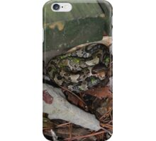 Juvenile Cottonmouth iPhone Case/Skin
