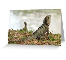 Australian Water Dragon.  Mt Coot-tha Botanic Gardens, Brisbane, QLD Greeting Card