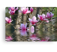 Japanese Magnolia in Water Canvas Print