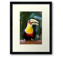 Red Breasted Toucan at Iguassu, Brazil  Framed Print