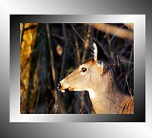 Doe On Guard (wall art) by TerriRiver