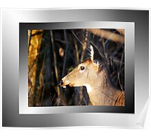 Doe On Guard (wall art) Poster
