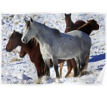 Mustangs Poster