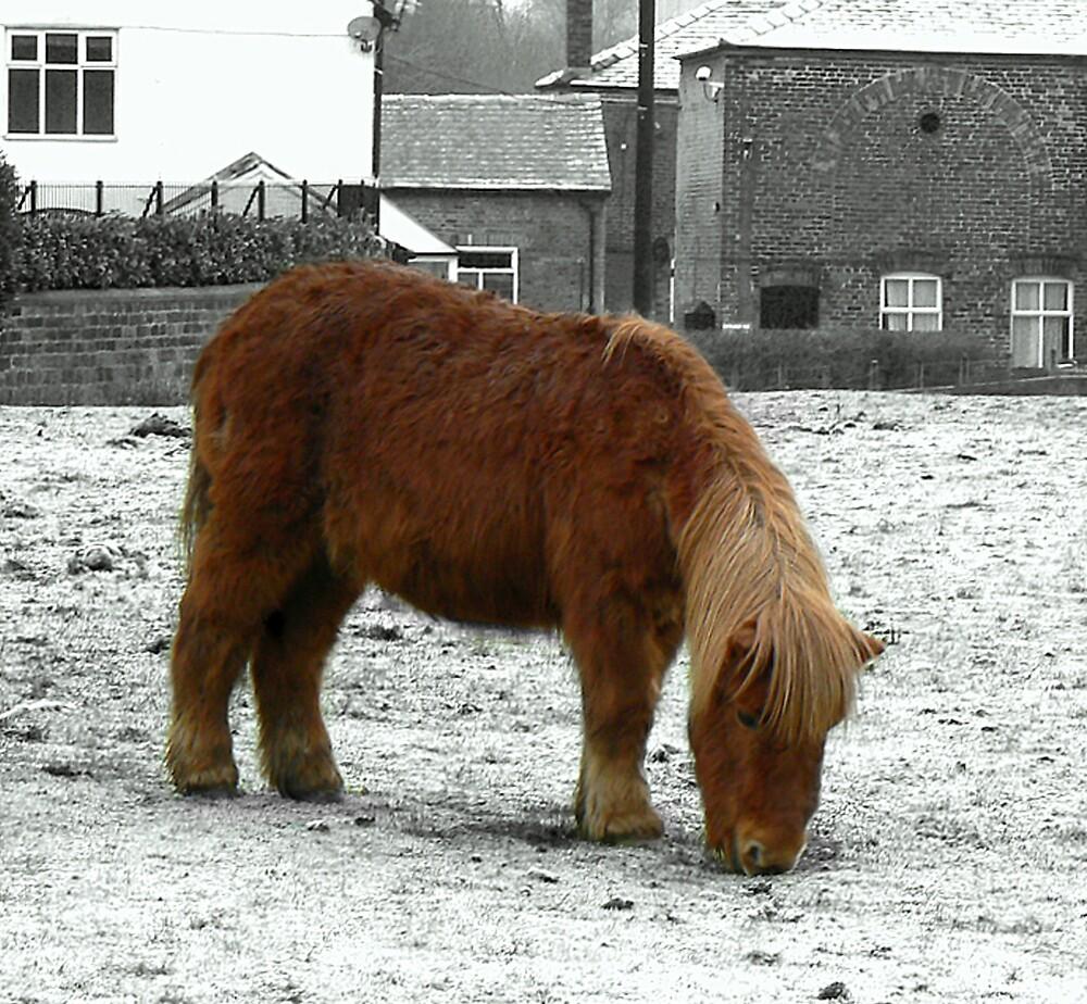 Shetland Pony by mariarty