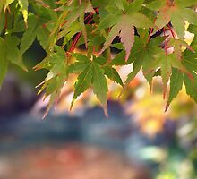 Green maples and Fall color by DerekEntwistle