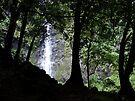 Waterfall, Tahiti by John Douglas