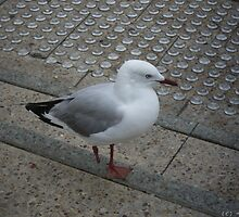 Long John Seagull by DreamingIce