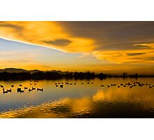 Golden Pond Photographic Print