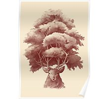 Old Growth  Poster