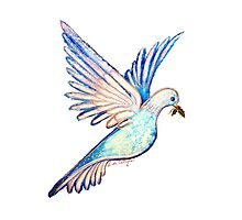 Christmas Dove Photographic Print