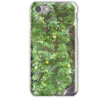 The Mexican Golden Chalice Vine! Growing up Moreton Bay Fig. Bot. Gdns. Adelaide. iPhone Case/Skin