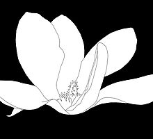 Magnolia 200 BW Drawing by wolfcat