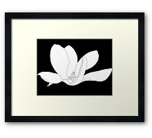 Magnolia 200 BW Drawing Framed Print