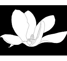 Magnolia 200 BW Drawing Photographic Print