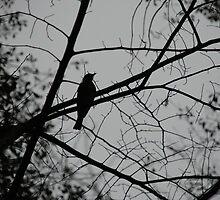 Lonely Bird by MorganAshley