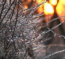 Sunrise on Ice by Kareliz