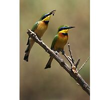 Little Bee Eaters Photographic Print