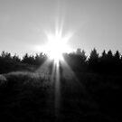 Winter Sun by Steven McEwan