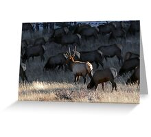Bull Elk With His Harem Greeting Card