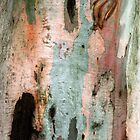 Red Gum Bark by Ern Mainka