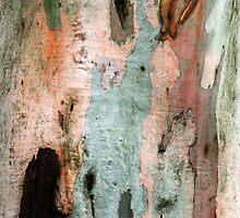 Red Gum Bark by Ern Mainka