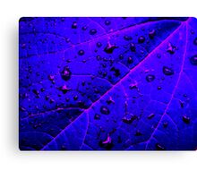Ingrained  Canvas Print