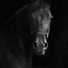 Dark Horse by Rachel Leigh