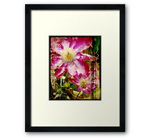 the clever clematis Framed Print